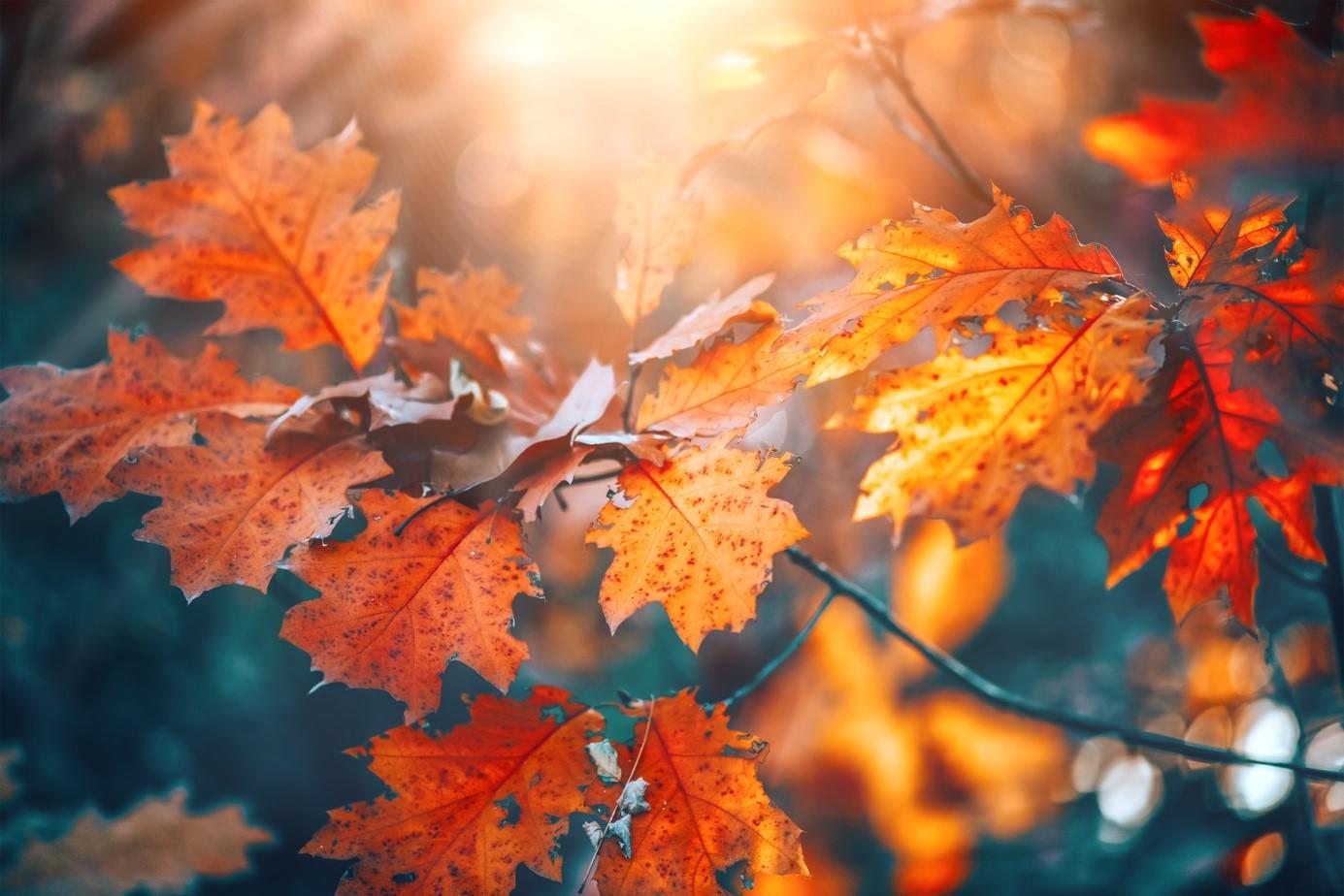 Herbst mit allen Sinnen